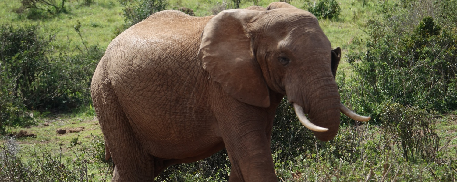 Addo Elephant National Park Day Tour