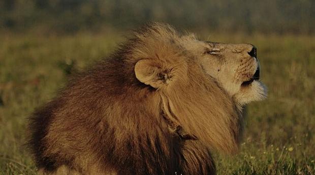 Big five wild animals south africa